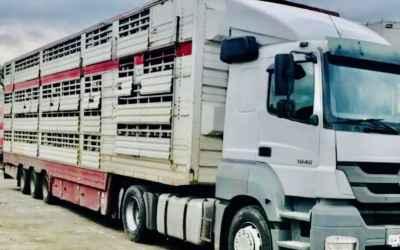 Услуги скотовоза на скотовозах - Шахты