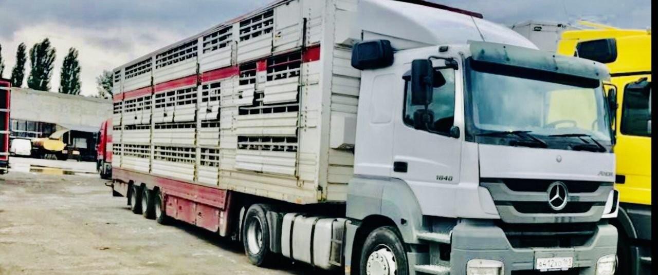 Перевозка скота на скотовозах - Шахты, цены, предложения специалистов